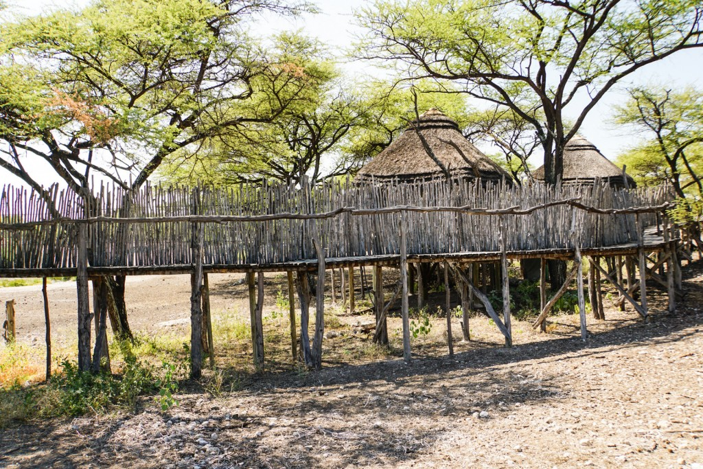 Ongama Tree Top Camp